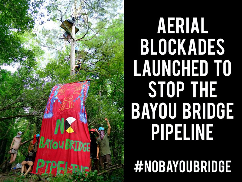 Breaking: Tree Sitters Block Bayou Bridge Pipeline Construction in Atchafalaya Basin